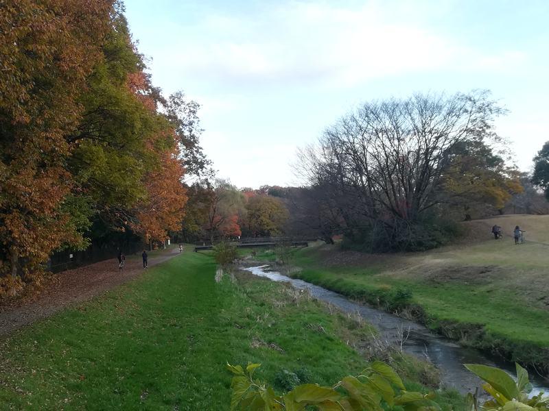 秋の野川公園、画面中央に流れるのが野川