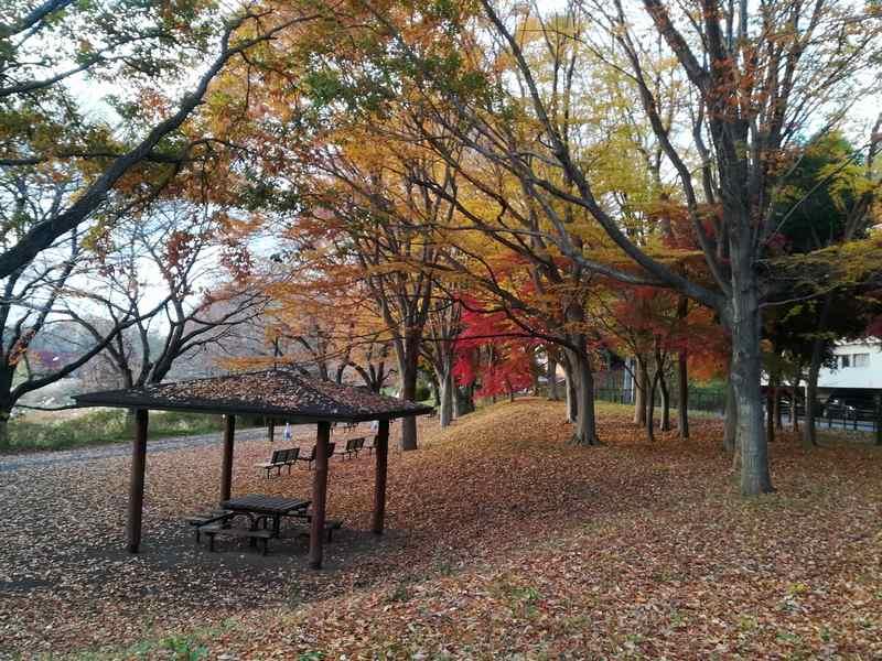 武蔵野公園の紅葉